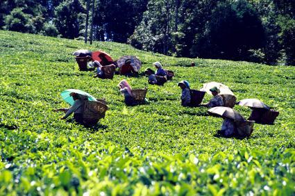 Darjeeling-Tour-Packages-RK-Puram